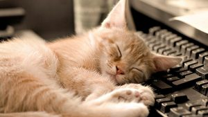 Is napping healthy?
